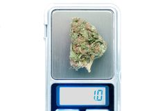 Cannabis plant close up Royalty Free Stock Photos
