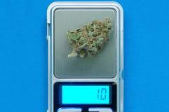 Cannabis plant close up Stock Photo