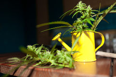 Cannabis plant with garden tools Stock Photos