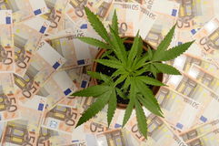Cannabis plant and lot of euro money Stock Images