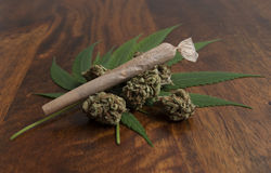 Cannabis sativa flower buds and leafs, with a rolled weed joint Stock Photos