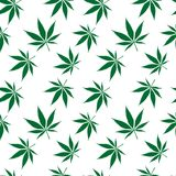 Cannabis seamless pattern extended Royalty Free Stock Photos