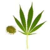 Cannabis seco e folha verde imagem de stock