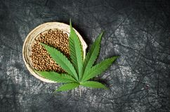 Cannabis seeds in bowl on dark textured background. Cannabis seeds in a bowl on dark textured background royalty free stock photo