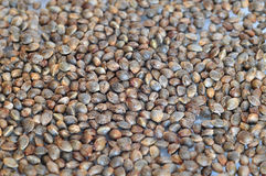 Cannabis seeds Royalty Free Stock Images