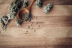 Cannabis seeds and money Royalty Free Stock Photo