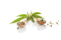 Cannabis seeds on wooden spoon. Cannabis seeds on wooden spoon and cannabis leaf on white background royalty free stock images