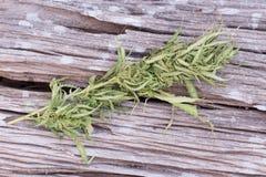 Cannabis sullo scrittorio di legno di lerciume Fotografie Stock