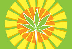 Cannabis sun rays Royalty Free Stock Images