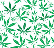 Cannabis Royalty Free Stock Photo
