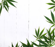 Cannabis. On a white background Royalty Free Stock Photos