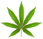 Cannabisblad op wit stock afbeelding
