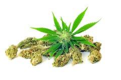 Cannabisinstallatie en knoppen op wit wordt geïsoleerd dat Stock Afbeelding