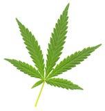 cannabisleaf Arkivbilder