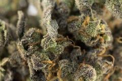 Cannabismacro 86052221 Stock Afbeelding