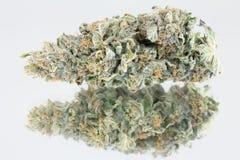 Cannabismacro Royalty-vrije Stock Afbeelding