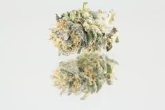 Cannabismacro Royalty-vrije Stock Afbeeldingen