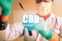 Cannabisolja, CBD-begreppet, kemist för experiment, genom att syntetisera sammansättningar med att använda droppglassen i en prov arkivfoton