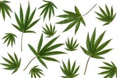 Cannabisväxt royaltyfri illustrationer