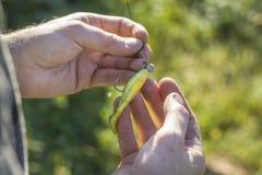 Canne à pêche de prises de pêcheur à la ligne et amorce de rotation Image stock