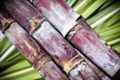 Canne à sucre Photos stock