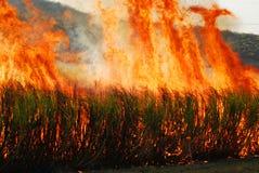 Canne à sucre brûlante Photographie stock libre de droits