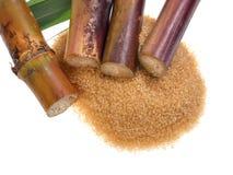 Canne à sucre d'isolement sur le fond blanc Image stock