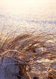 Canne congelate, concetto di stagione invernale Fotografia Stock