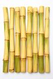 Canne de sucre brut Images stock