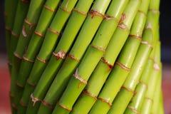 Canne di bambù Immagini Stock