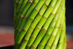 Canne di bambù Immagine Stock Libera da Diritti