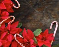 Canne di caramella e del Poinsettia Immagine Stock
