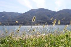 Canne di erba con la vista scenica fotografia stock