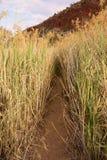 Canne ed erba alte lungo la pista di entroterra Fotografia Stock