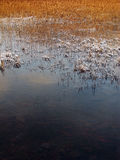 Canne in inverno, Loch Slapin, Skye, Scozia Fotografia Stock