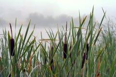 Canne nel lago fotografia stock