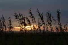 Canne profilate sul cielo di tramonto Fotografie Stock Libere da Diritti