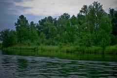Canne su un lago 3 michigan Fotografia Stock
