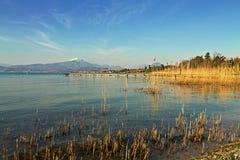 Canne sul lago Immagini Stock