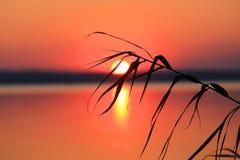 Canne sur le coucher du soleil Image stock