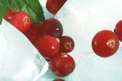 Canneberge et glace Photo stock