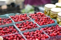 Canneberges au marché d'agriculteurs Photographie stock libre de droits