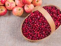 Canneberges dans un panier sur un fond et des pommes de tissu se trouvant après Photographie stock