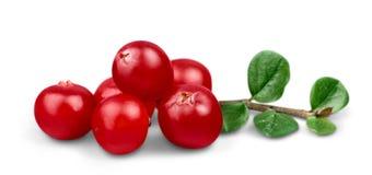 Canneberges mûres rouges d'isolement sur le blanc Photo libre de droits