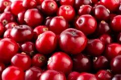 Canneberges mûres rouges macro. photos stock