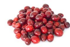 Canneberges rouges fraîches Photo libre de droits