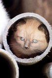 Canned cat. Cat inside a tube Royalty Free Stock Photos