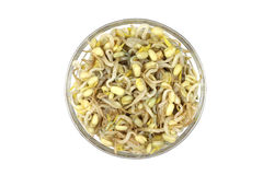 Canned corn sprouted soybeans Stock Photography