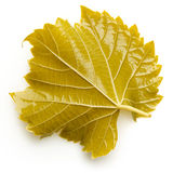 Canned grape leaf for dolma on white background Royalty Free Stock Images