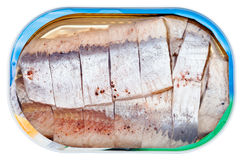 Canned marinated herring in brine isolated Stock Photos